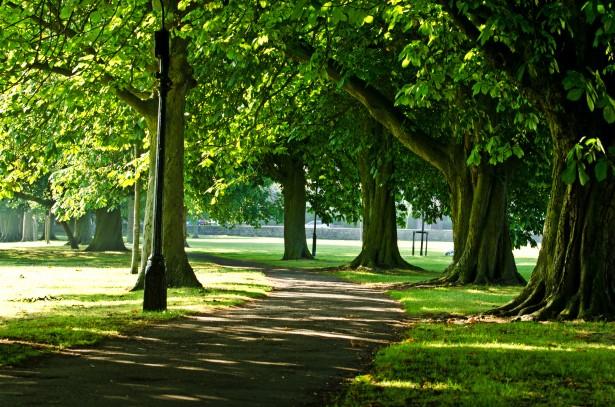 tree_park